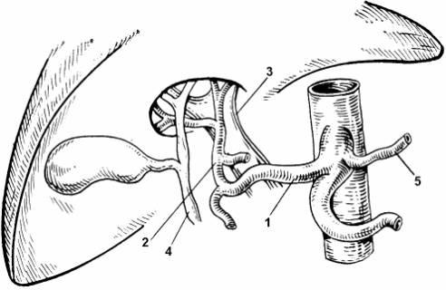 Схема артериального
